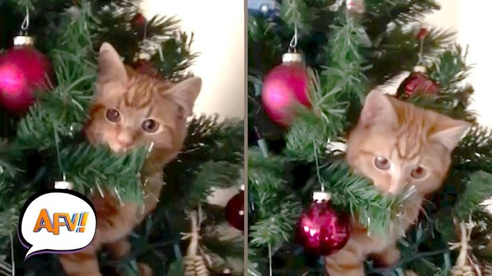 Cats Vs Christmas Trees.Cats Vs Christmas Trees Funniest Showdowns Afv Funny